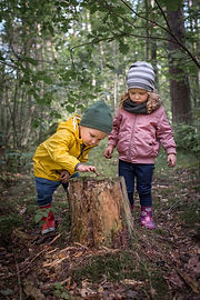 Two preschool children exploring forest,