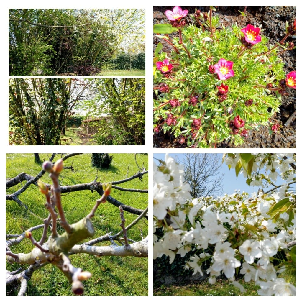 Jardin_de_La_Maison_©