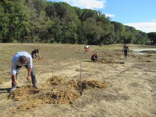 Plantació de arbusts per a la naturalització de la bassa de Mas Ascarnó