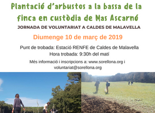 Programa de voluntariat ambiental 2019