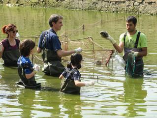 Recuperem la bassa de Can Rufí.