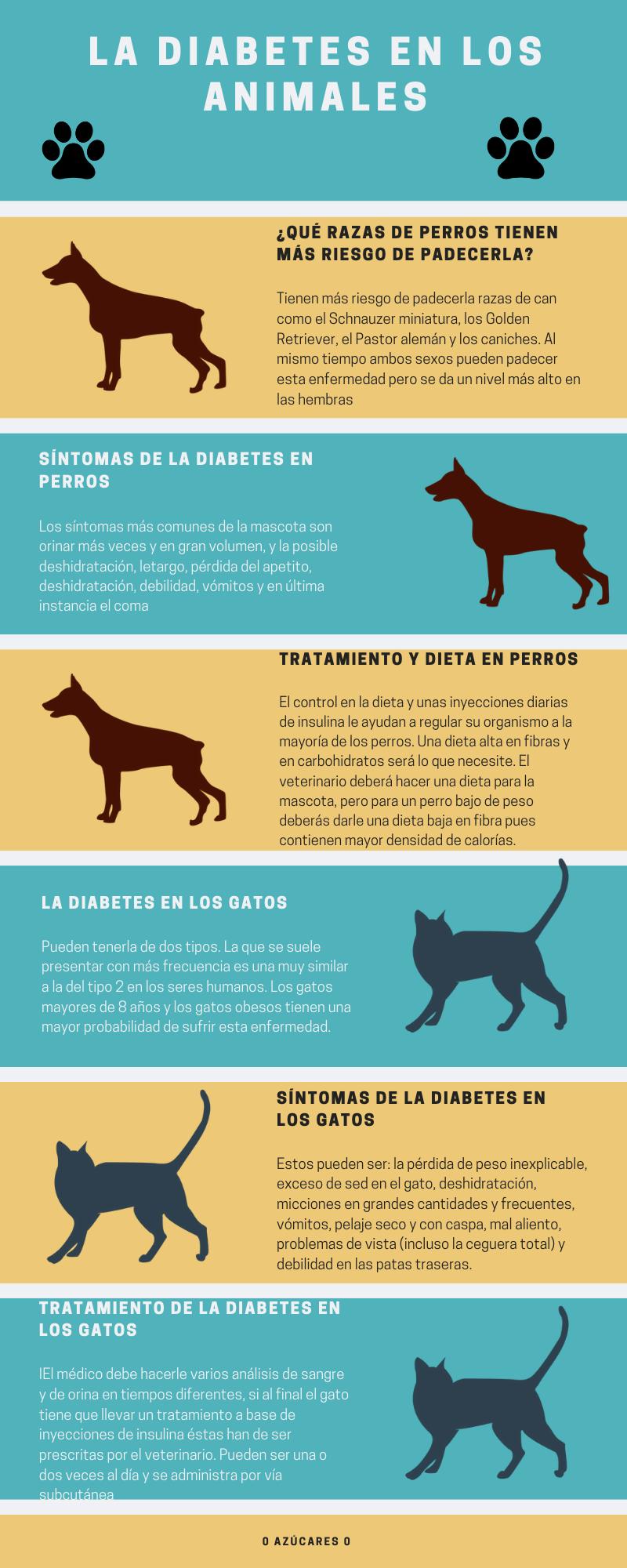 pérdida de peso del perro y micción frecuente