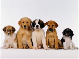 """La """"puppy room"""" pour les étudiants..."""