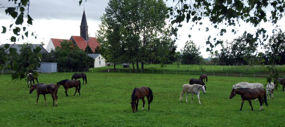 Unsere Pferde auf dem Sportplatz