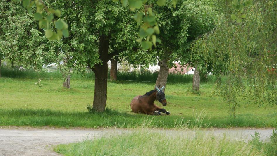Theo auf der Apfelbaumkoppel