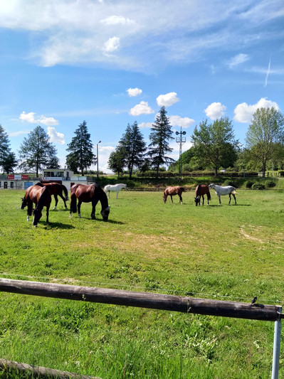 Die Pferde auf dem Sportplatz