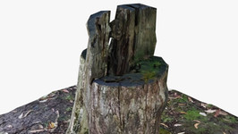 Tree Stump Carved Chair