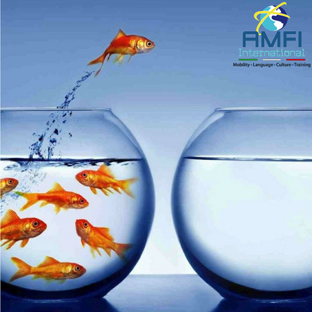 [INTERNSHIPS] AVAILABLE POSITIONS provided by AMFI INTERNATIONAL