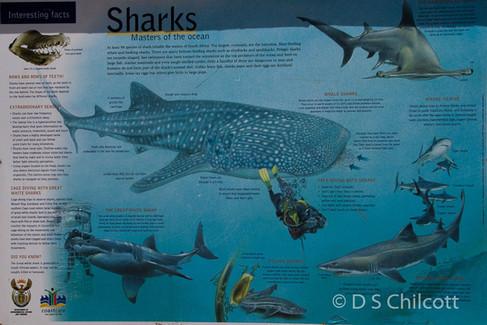 Gansbaai shark species board