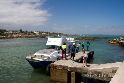 Gansbaai boat I went cage diving