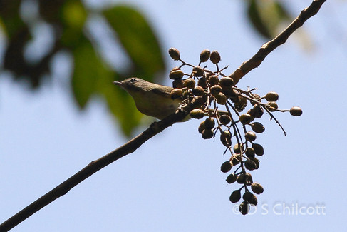 Bird sp