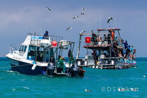 Gansbaai cage diving boats