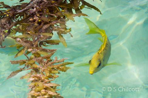 Fish sp
