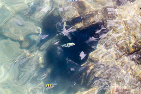 Fish species in the harbour