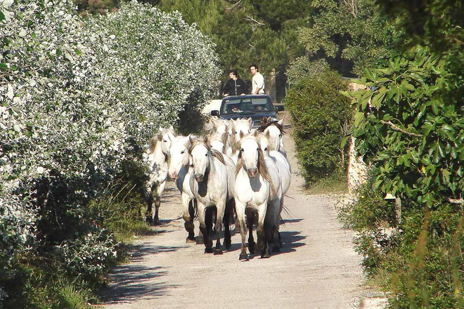 Majorca ponies