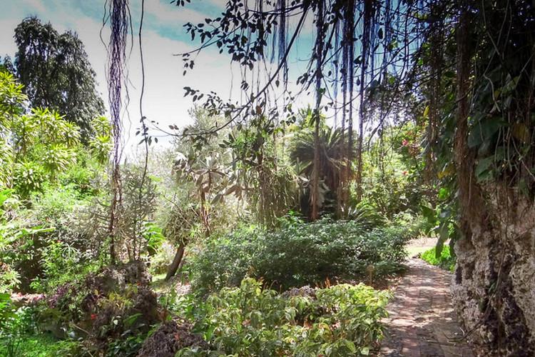 Barbados gardens