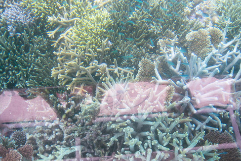 View of coral from glass bottomed boat