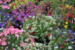 flowers sale 8.JPG