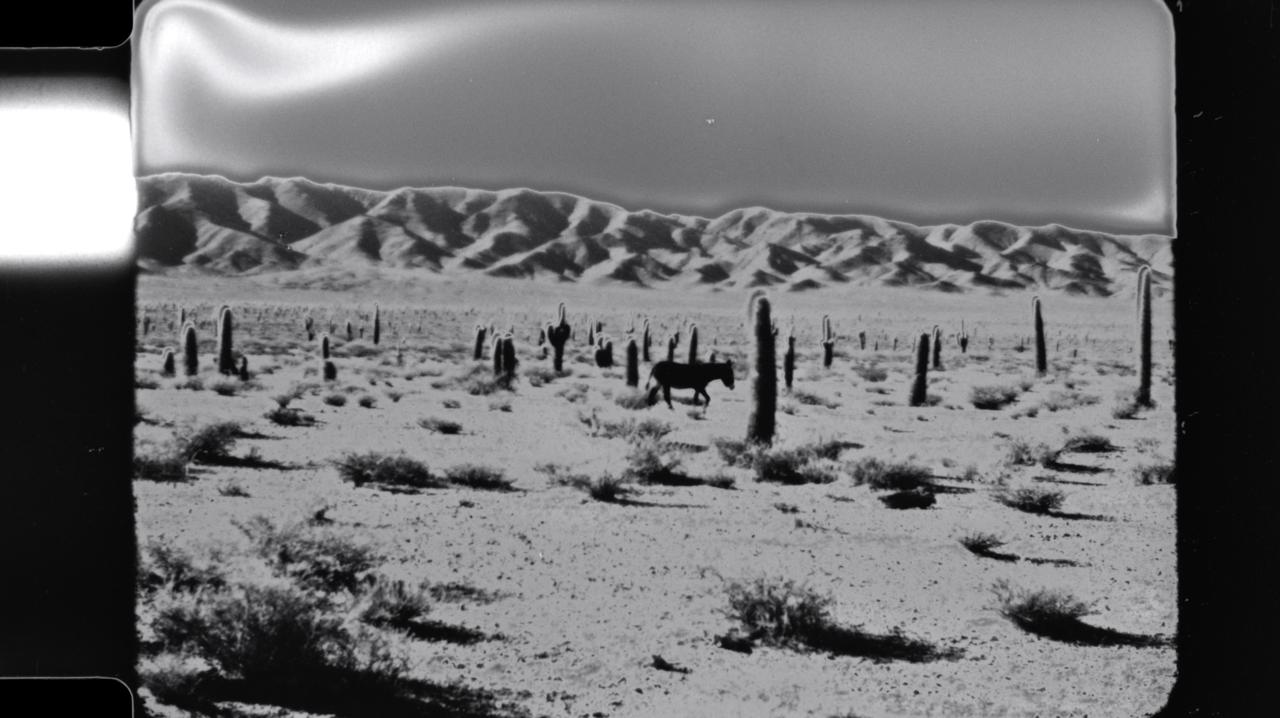 Argentina Desert Series (John Price)