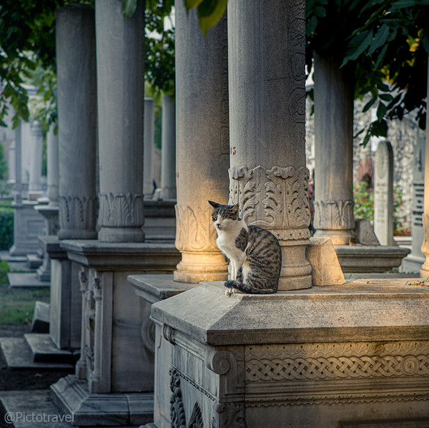 Котик на старом кладбище