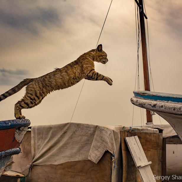 Кот на рыбацких лодках