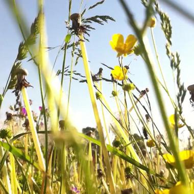 champs e fleurs 1.mov