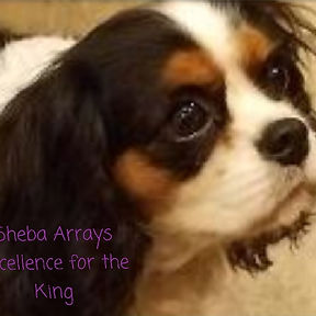 MOM- Sheba Arrays Excellence for theKing
