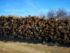 Piles de bois d'acacia (2).jpg