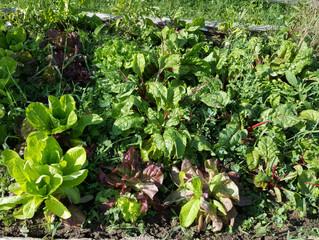 Gardens growing great!