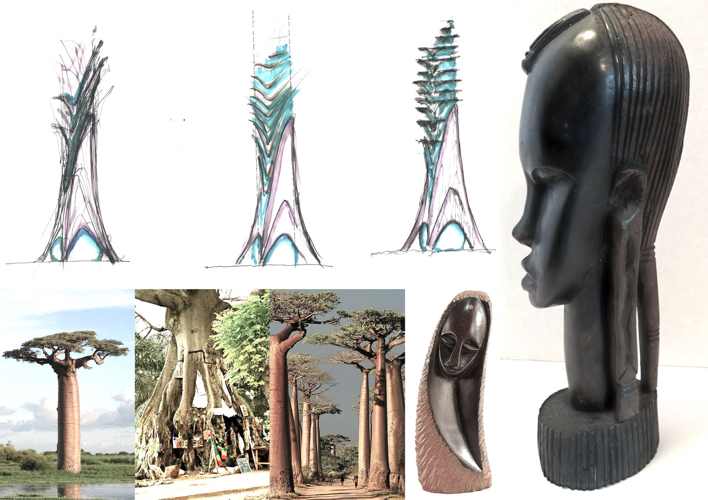palm exotica
