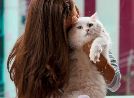 ¿Por qué nuestras mascotas son tan importantes?