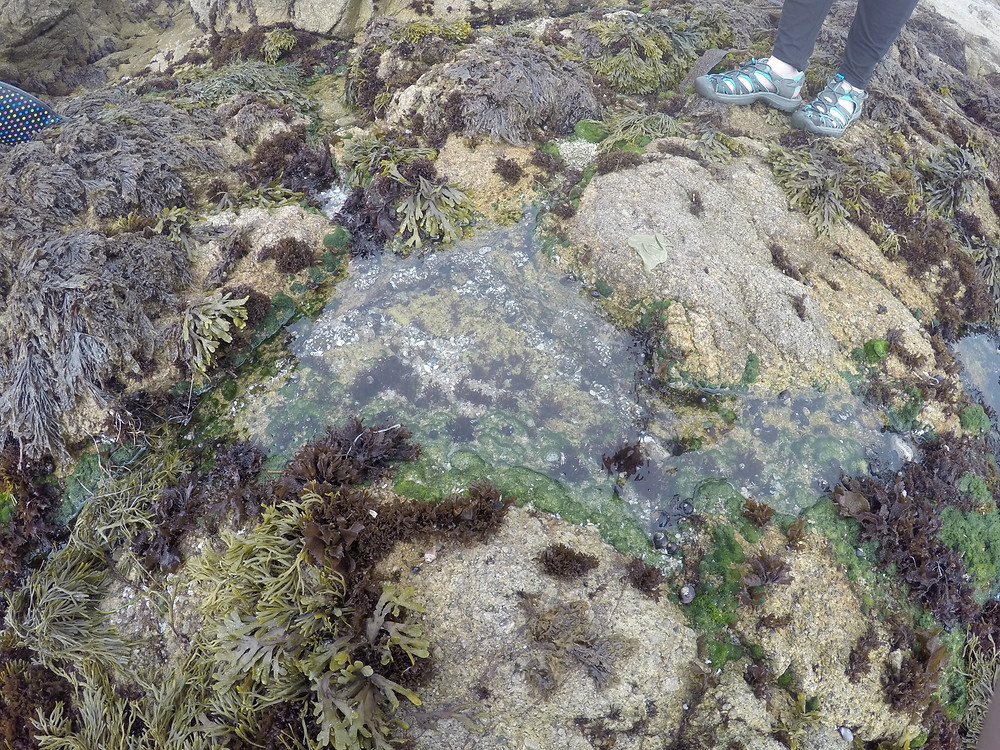 Image of a tidepool in Monterey Bay, California