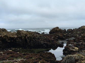 Welcome to the intertidal