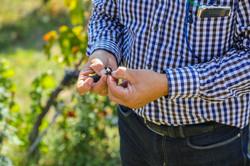 Meet Local Winemakers