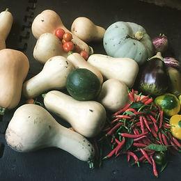 vegetables-fruit-edible-gardens