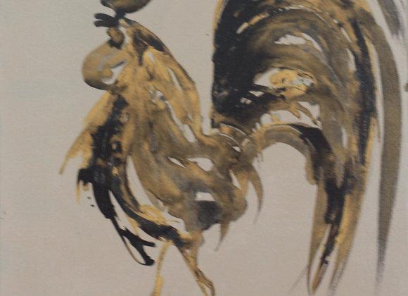 Coq flamboyant