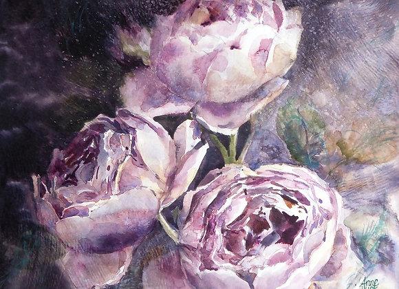 Les roses de l'ombre