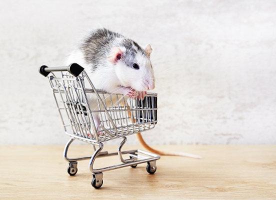 Rat au Caddie (série 2018)