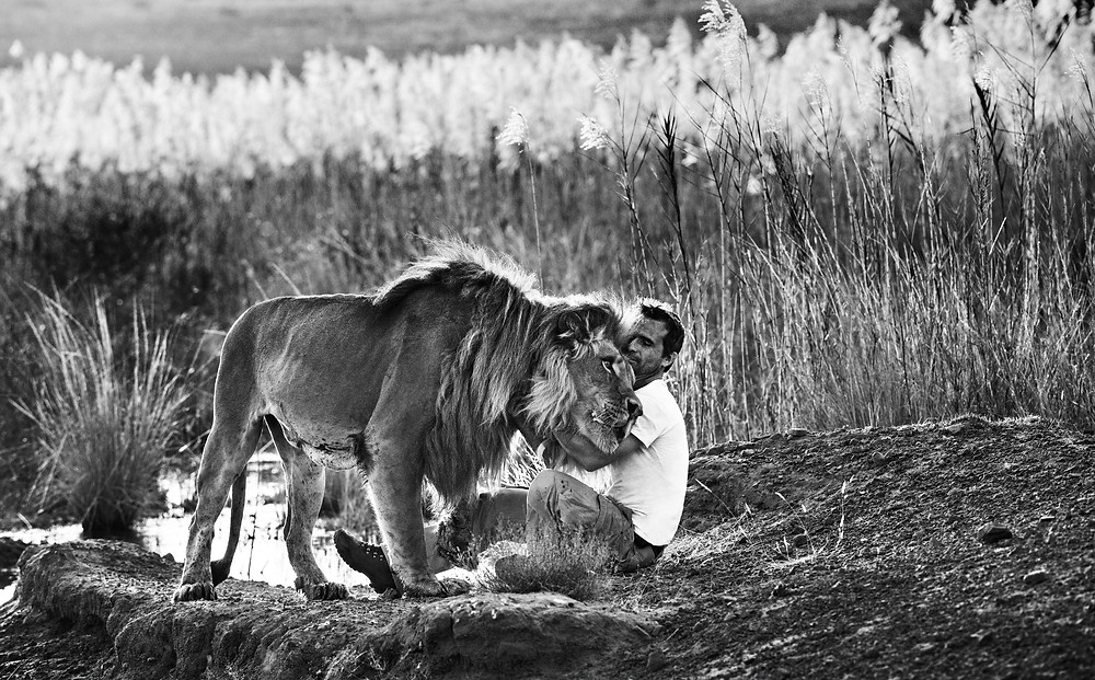 Kevin Richardson with lion