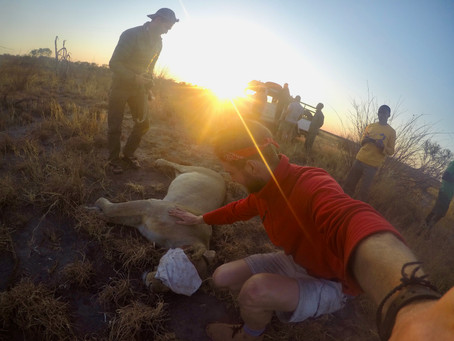 Video Conservation Diaries - Namibia