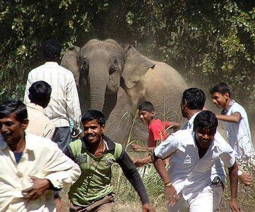 human-wildlief conflict with elephants in India