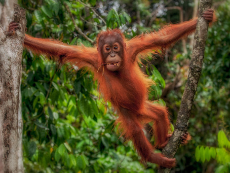 A Complete Guide to Palm Oil in Photos