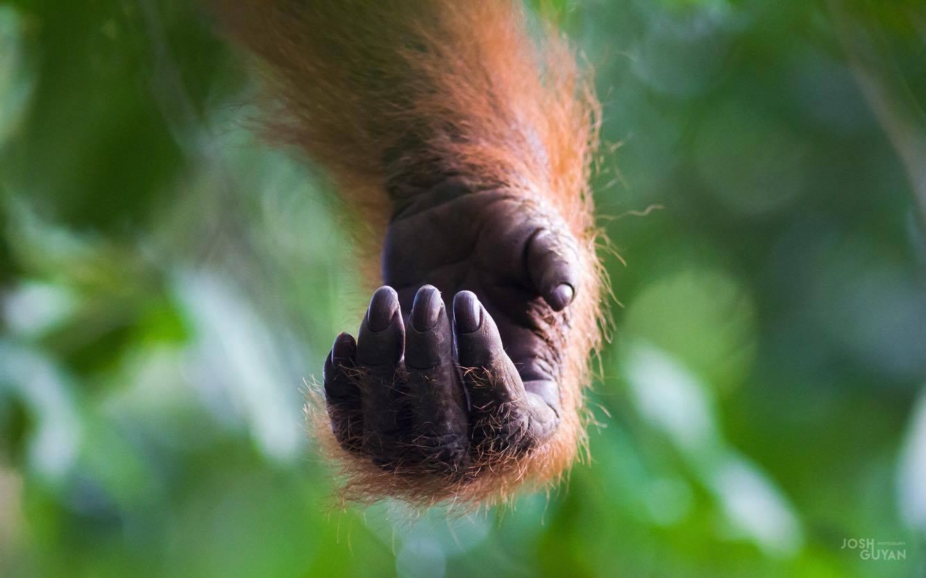Podcast - Palm Oil