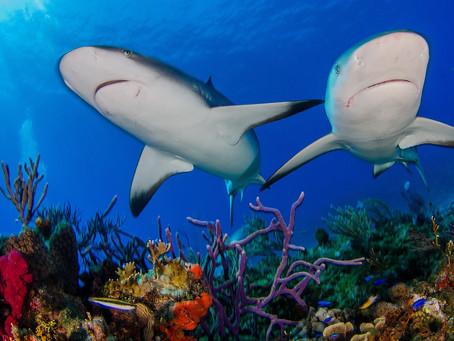 Shark Poo & Coral Reefs
