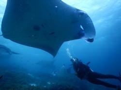 Manta Banter & Shark Diaries