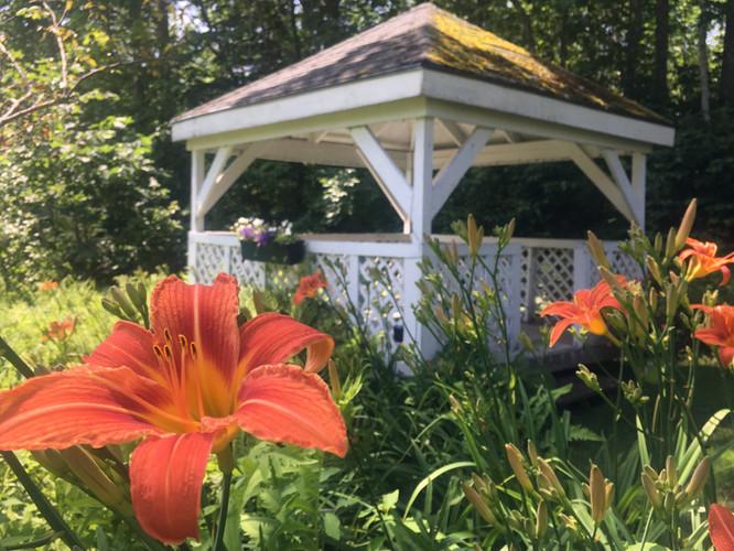 Lilies by the gazebo
