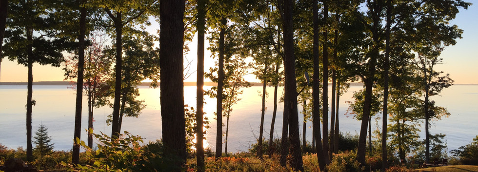 trees and ocean sunrise