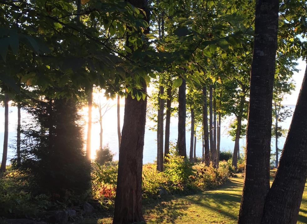 sun through the woods