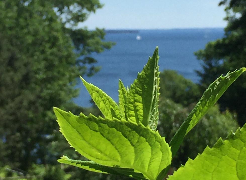 leaves on the ocean