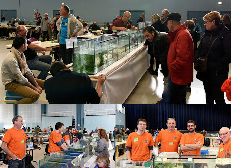 Bourse du club aquariophile de St-Brieuc (ACARA)